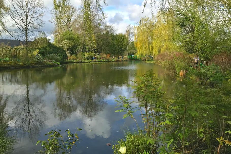 Quelles plantes adopter pour un jardin avec bassin?