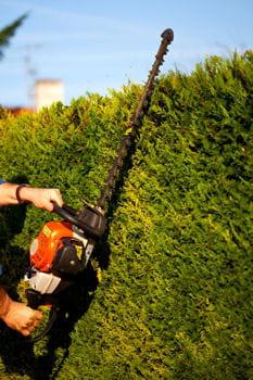 taillez les haies de buis et d'arbustes en topiaires