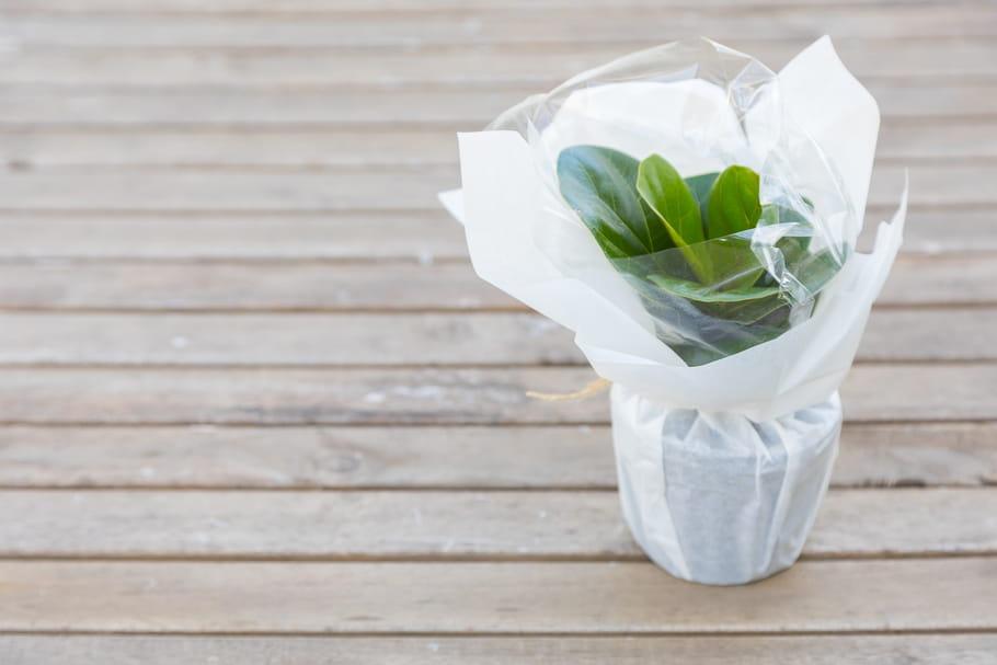 6sites pour se faire livrer des plantes