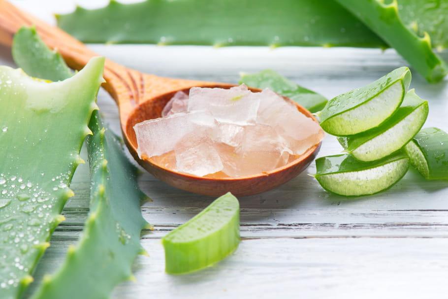 Aloe vera : coup de soleil, acné... mode d'emploi et dangers
