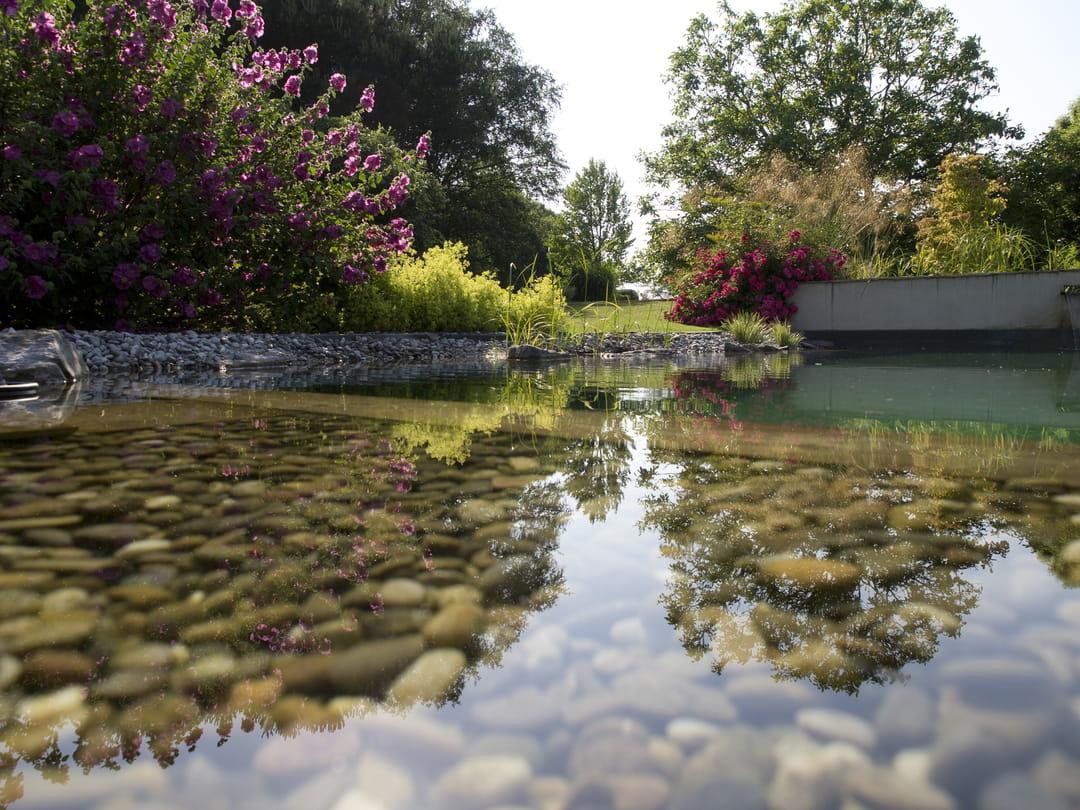 baignade-paysagere-eau-douce