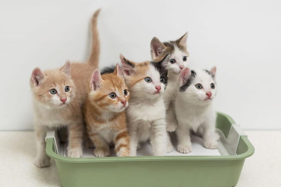 Meilleures litières pour chat: comment choisir?
