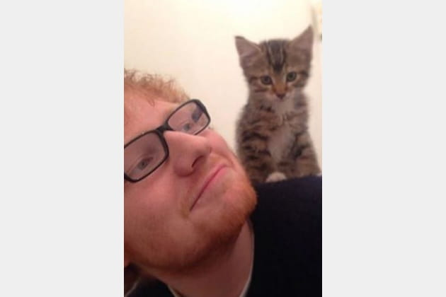 Ed Sheeran et son chaton
