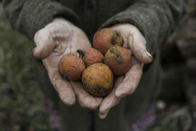 Les pommes de Tchernobyl