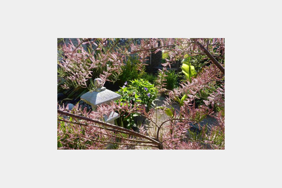 Un majestueux tamaris ambiance zen dans le jardin for Le jardin normand