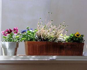 nettoyez vos jardinières des plantes à floraisons estivales