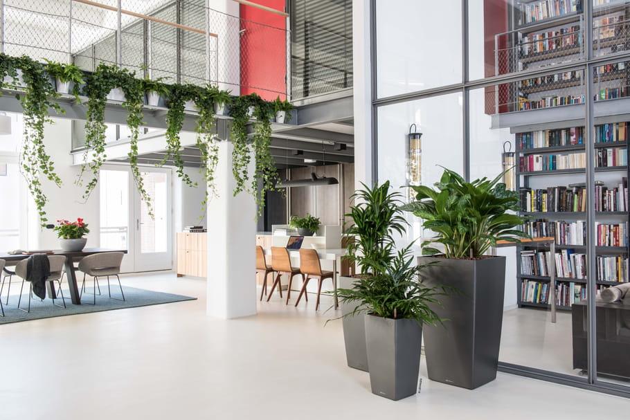 Transformez votre intérieur en city jungle