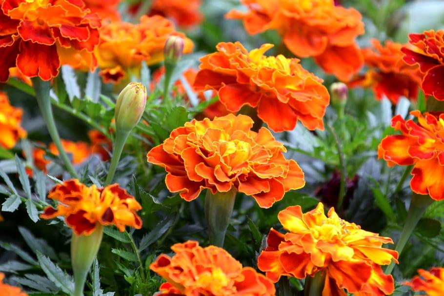Floraison en octobre