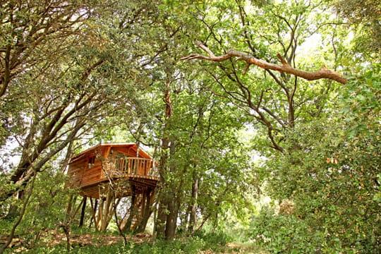 Cabane perchée pour une nuit dans les arbres