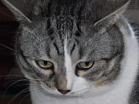 chat inquiet aurore barbare