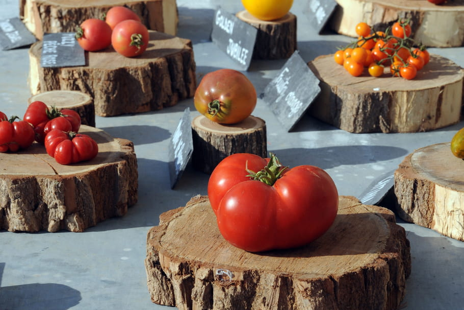 Le Festival de la Tomate vous invite à une pasta party