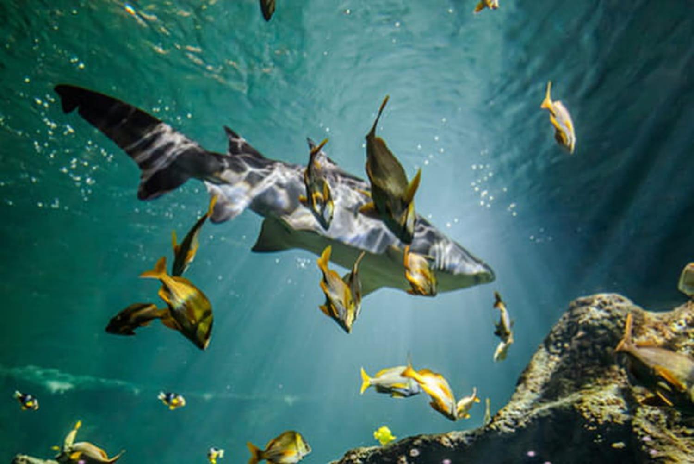 Aquarium de La Rochelle : à la découverte du monde marin