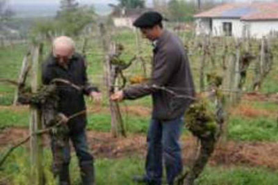 Une vigne bicentenaire classée patrimoine historique