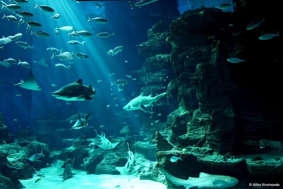 Mare Nostrum, un aquarium ludique ouvert toute l'année à Montpellier