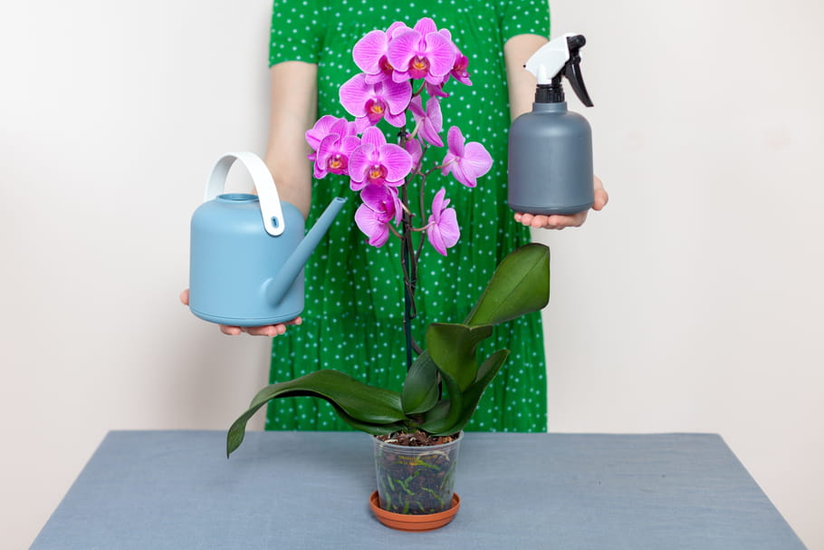 Arroser Une Orchidee