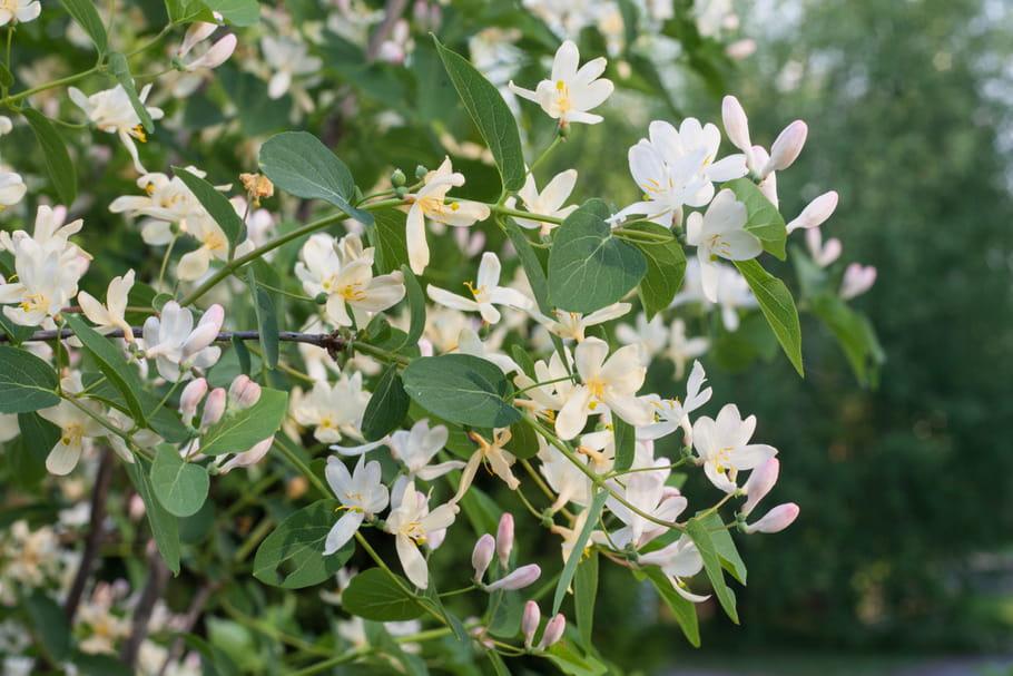 Comment avoir un jardin parfumé toute l'année?