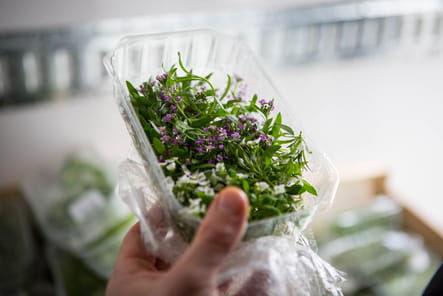 Le plein de petites herbes aromatiques