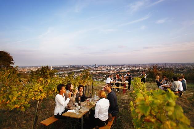 Dégustation dans les vignes viennoises