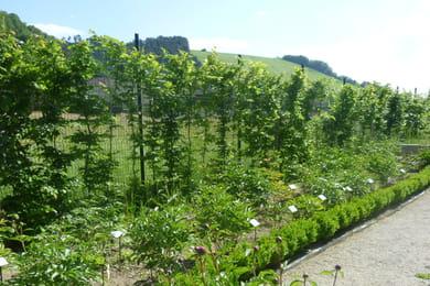 Vigne vierge plantation entretien et taille de cette for Association entretien jardin