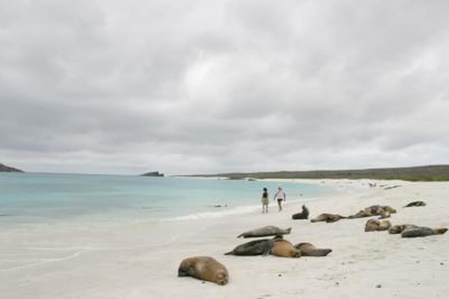 Galapagos : randonnée d'île en île