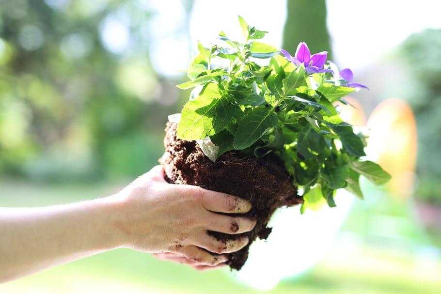 Avec Madeleine & Gustave, troquez vos plantes!