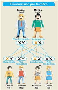 schéma de la transmission de l'hémophilie quand la mère est porteuse du gène.