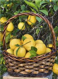 efficace, peu cher et très facile à utiliser, le citron est une autre valeur