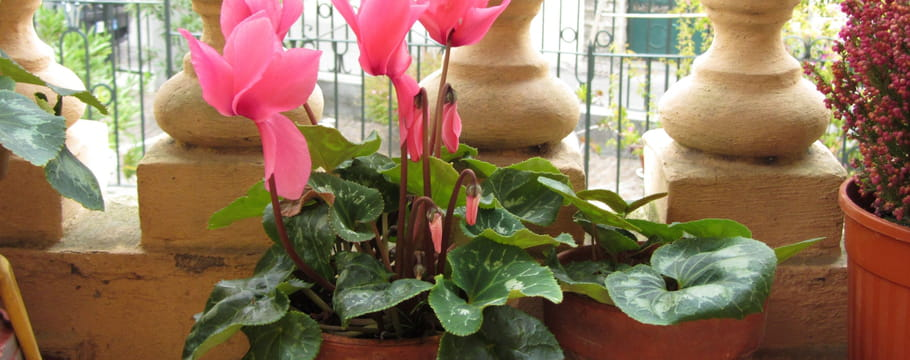 Calendrier du jardinage for Horaire jardinage