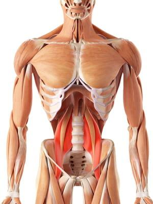 schéma muscle psoas