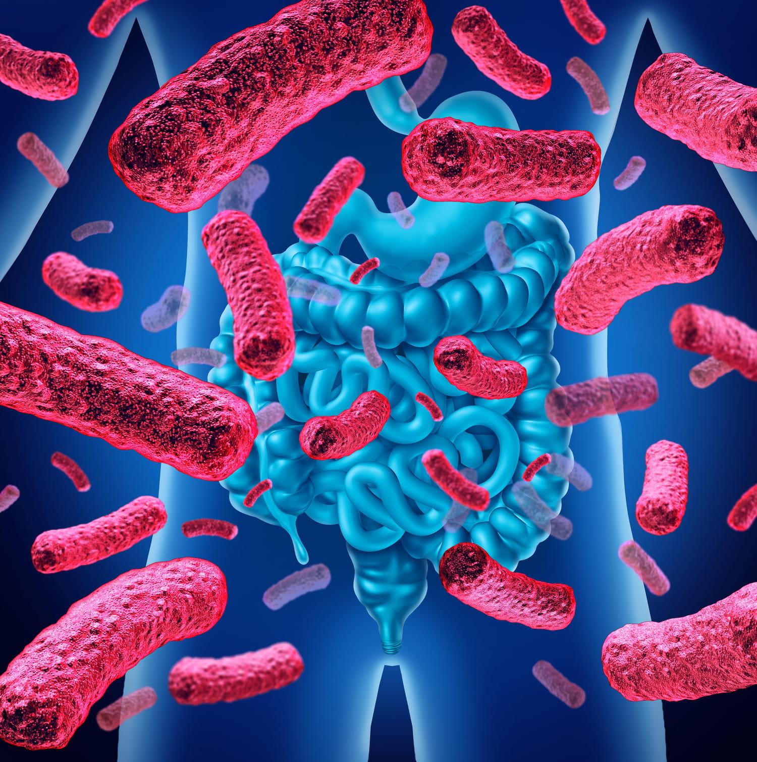 Microbiote: définition, rôle, intestinal, cutané