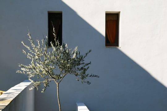 Eclat d'olivier