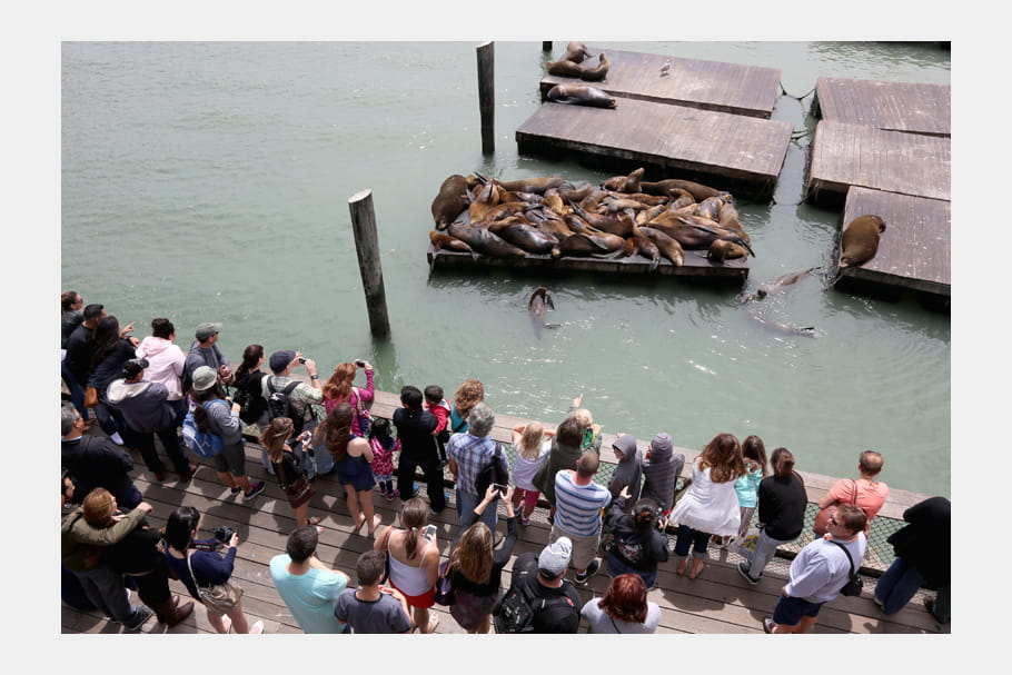 Les lions de mer sur le pier 39