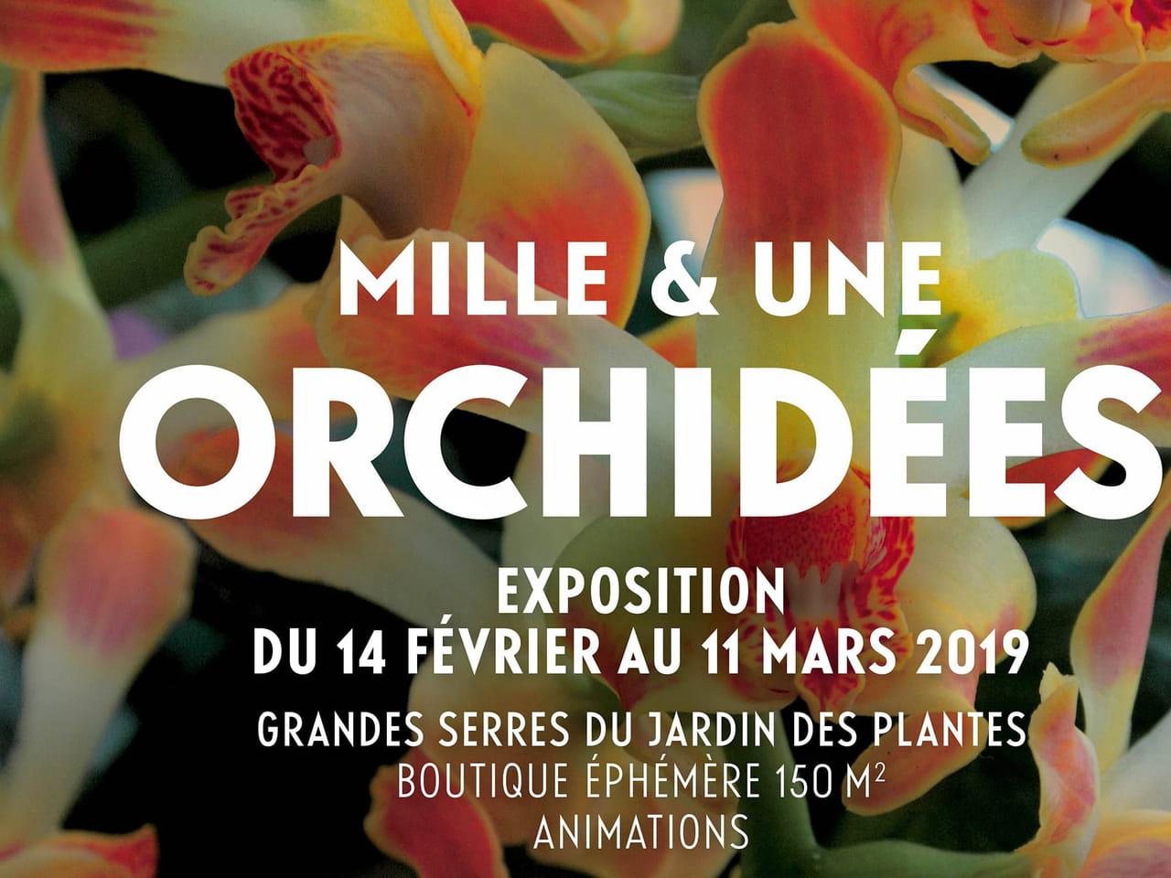 Mille & une orchidées, l\'exposition du Jardin des Plantes à ...