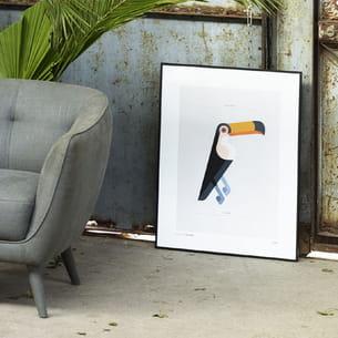 affiche toco toucan de josh brill pour habitat
