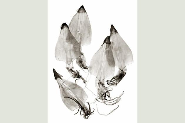Squids (encornets) par Stefan Kirchner