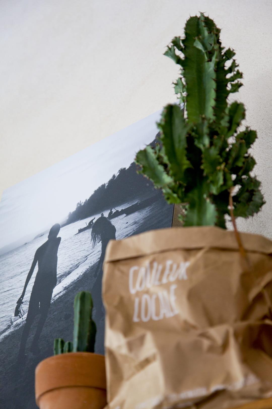 Humidité Dans Une Piece Que Faire ces plantes qui absorbent l'humidité