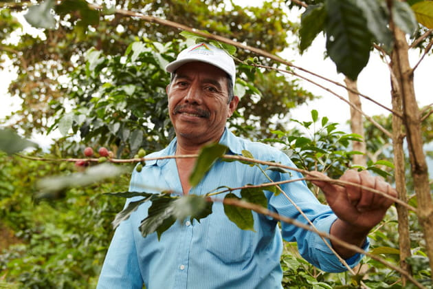 Tanim de Chiapas : un café divin