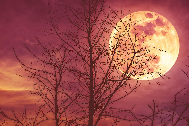 Lune rousse 2021: quand commence-t-elle?