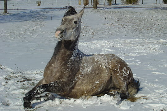 Jument dans la neige