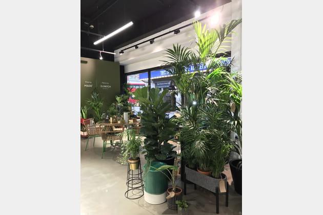 L'espace dédié aux green addicts