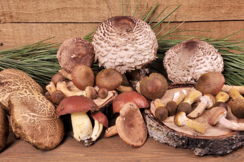 Tout sur les champignons: les choisir, les conserver, les cuisiner...