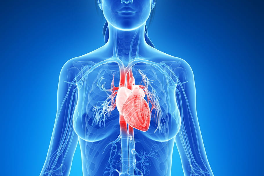 Cœur: anatomie, rôle, opération
