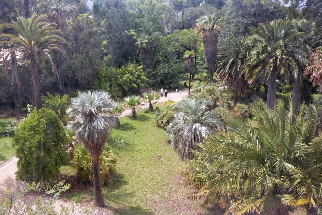 jardin-exotique-antibes-thuret