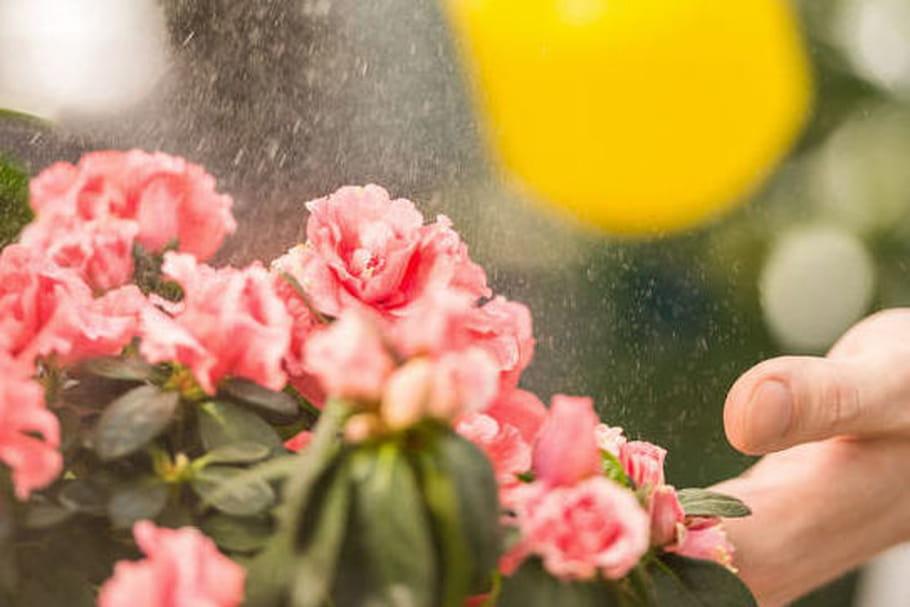 Glyphosate : l'herbicide suspecté d'être cancérigène ne sera pas tout à fait interdit