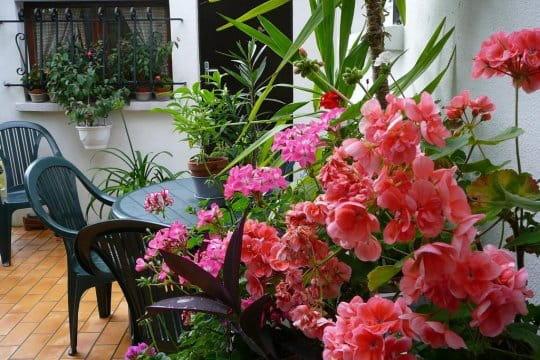 Une terrasse bien fleurie