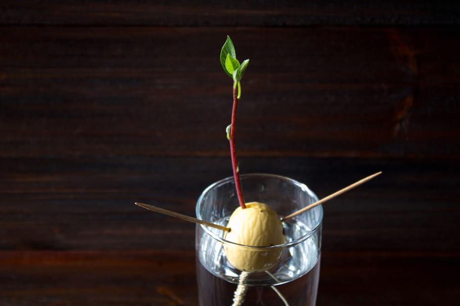4plantes que vous pouvez avoir gratuitement chez vous