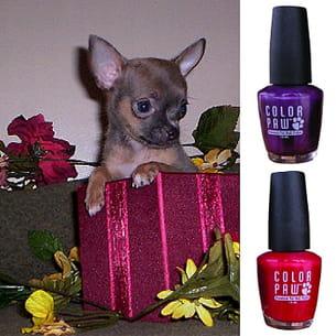 color paw embellit les pattes de votre chien.