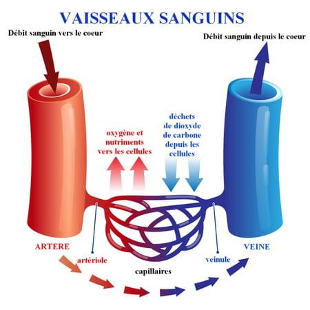 capillaire sanguin