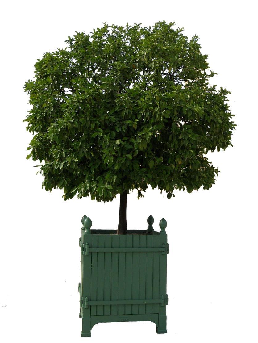 """Bac Pour Arbuste De Jardin coup de coeur : les caisses à oranger """"château de versailles"""""""