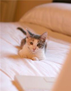 difficile de ne pas craquer quand félix vient ronronner près de votre oreiller ?